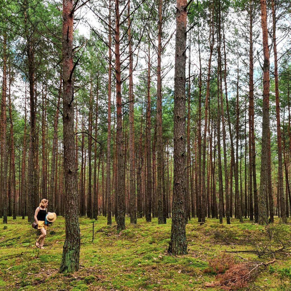 las w Świniotopie